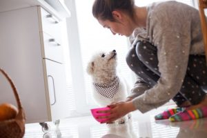 Can My Pet Make Me Sick? An Overview of Zoonotic Diseases